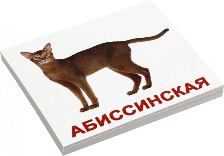 Породы кошек Вундеркинд с пеленок обучающие мини карточки для детей 98х83 мм 20 шт.
