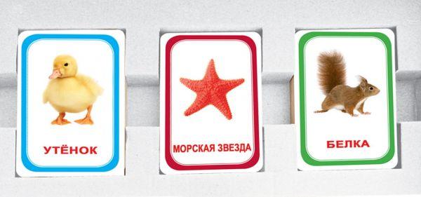 Парочки выпуск 2 Вундеркинд с пеленок 60 ламинированных карточек