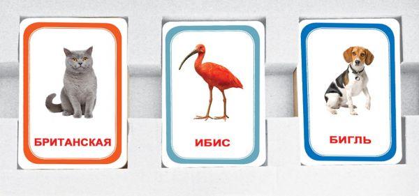 Парочки выпуск 1 Вундеркинд с пеленок 60 ламинированных карточек